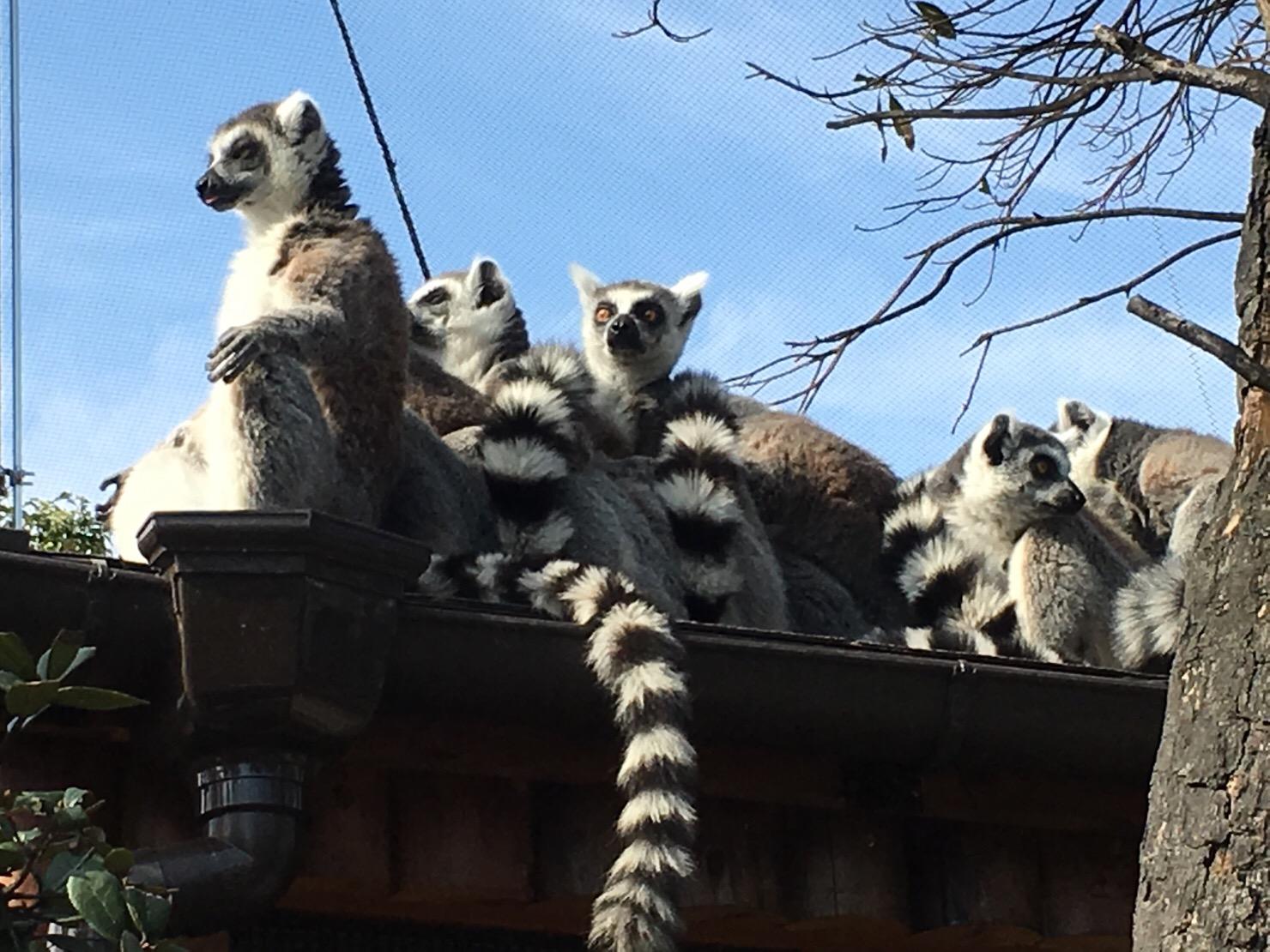 神戸動物王国 連なる猿